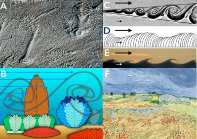 Biologists-Reveal-Why-Early-Life-Began-to-Get-Larger-in-Earths-Oceans