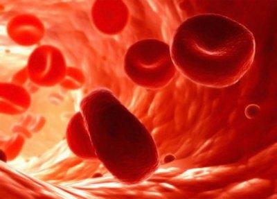 globulos rojos sangre