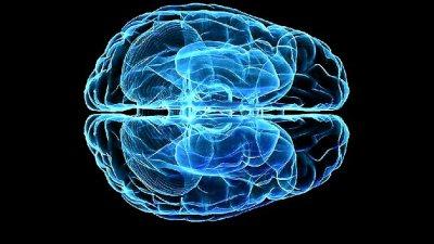 469046-brain